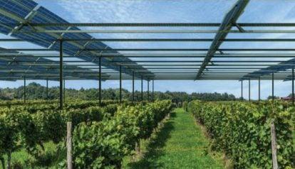 Cần xây dựng mô hình điện mặt trời kết hợp nông nghiệp